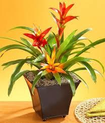 Low Light Indoor Flowers Best 25 Best Grow Lights Ideas On Pinterest House Plants