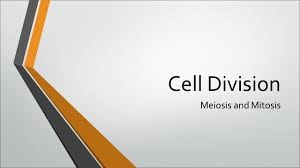 100 study guide cell division answers biology quiz study