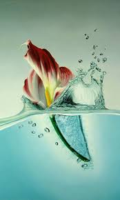 flower wallpaper for nokia x water flower nokia x wallpaper nokia x and nokia xl wallpapers