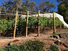 Setting Up A Backyard Vineyard Bean There Dug ThatBean There Dug - Backyard vineyard design
