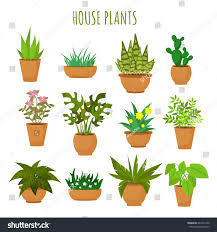 indoor house green plants flowers isolated stock vector 667214188