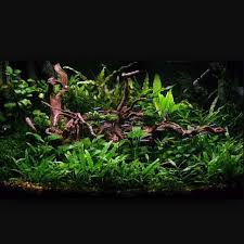 Aquascape Fish 293 Best Aquascape Images On Pinterest Aquarium Ideas Fish