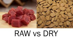 raw food diet for dogs optimum health and extended longevity