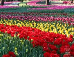 Beijing Botanical Garden Beijing Botanical Garden