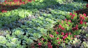 10 ways to grow edibles as ornamentals