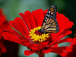 butterfly flowers amazing beautiful butterfly wallpapers