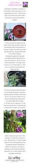 136 best vertical gardening images on pinterest gardening