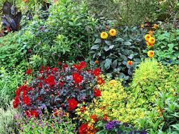 types of tropical plants plants for a tropical garden hgtv