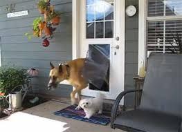 doggie door in glass door qr1