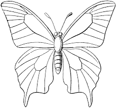 butterfly outline printable free coloring pages on masivy world 3