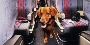 airline requirements for traveling with an emotional support dog