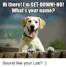 Hi Memes - hi there i m get down no what s your name sound like your lab
