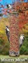 just getting started cole u0027s wild bird feed