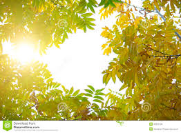tree with bright green and yellow leaves stock photo image 35807294