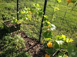 garden update flowers galore laura bruno u0027s blog