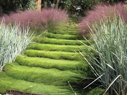 Backyard Ideas Without Grass Backyard Ideas Without Grass Landscape Contemporary With Grass