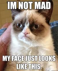 Not Mad Meme - im not mad cat meme cat planet cat planet