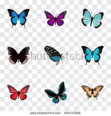 papilio ulysses stock images royalty free images vectors