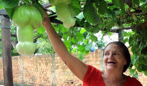 brazil putting the in passion fruit public radio