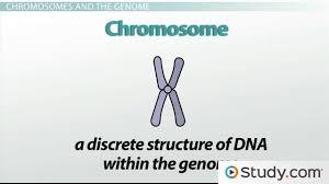 genetics heredity traits u0026 chromosomes video u0026 lesson