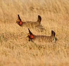Colorado wildlife tours images 62 best trinidad co images trinidad colorado jpg
