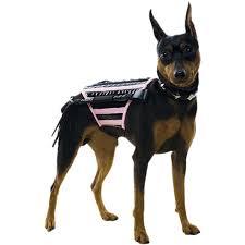 Chihuahua Halloween Costumes Halloween Costume Ideas Dogs