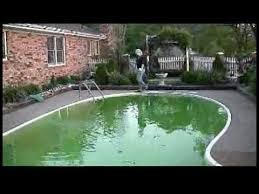 removing algae from a swimming pool shocking swimming pool water