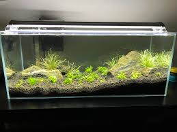 my one month old tank is badly the planted tank forum