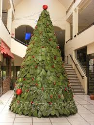 mexican christmas tree plaza bugambilias in ajijic jalisc u2026 flickr