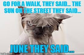 Make Your Own Cat Meme - angry wet cat meme generator imgflip new pinterest cat meme