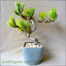 make a u201cfaux u201d bonsai tree with air plants craft organic