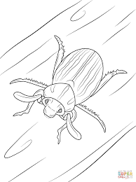 ten lined june beetle coloring page free printable coloring pages