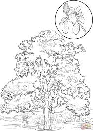 southern magnolia tree coloring page free printable coloring pages