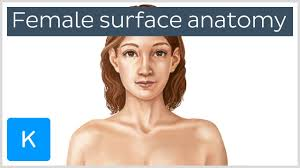 Female Anatomy Video Video Female Body Surface Anatomy Kenhub