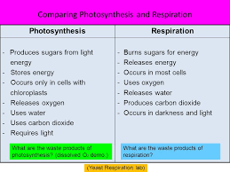 which plant cell organelle uses light energy to produce sugar which plant cell organelle uses light energy to produce sugar ace
