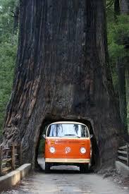 Chandelier Tree California I Wish The Chandelier Drive Thru Tree 1001 Scribbles
