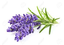 lavender flowers lavender flowers stock photo picture and royalty free image