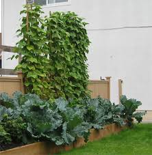 Advantage Of Raised Garden Beds - raised garden bed jack up the soil level with the perfect garden