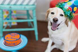 dog birthday party 24 dog birthday party 1 jpg