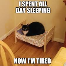 Sleepy Cat Meme - sleepy cat imgflip