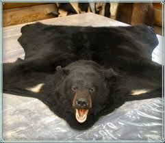 bear skin rug with head for real bear skin rugs animal taxidermy