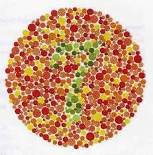 color blindness hemophilia brown teeth drosophila melanogaster