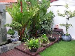 tropical plants for small garden design with dark wooden deck plus
