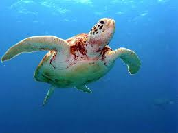 Turtle Meme - good guy turtle