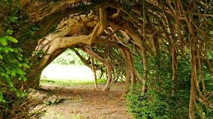 radio 3 the essay the meaning of trees series 1 yew