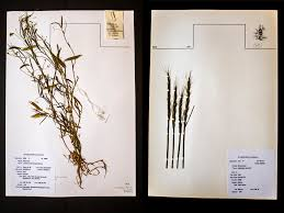 seed collection of australian native plants how a seed bank almost lost in syria u0027s war could help feed a