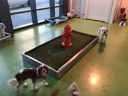 Daycare Room Dividers - our dog day care equipment includes colorful kennel room dividers