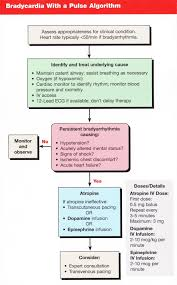 acls bradycardia with a pulse algorithm icu nursing pinterest