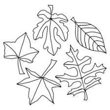 free printable leaf coloring pages for kids coloring pages leaves