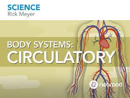 body systems digestive